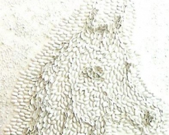 Profile Image - aya charife